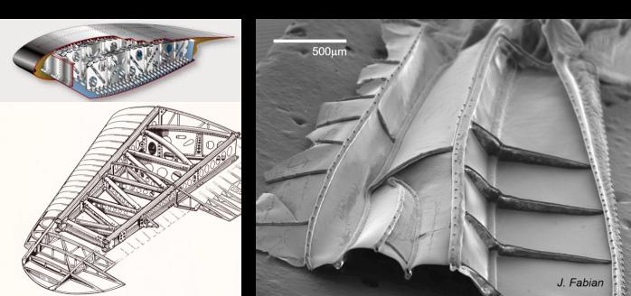 Wing comparison